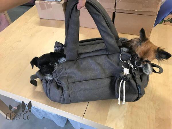 TGL BELLAGIO NUBUK Hundetasche