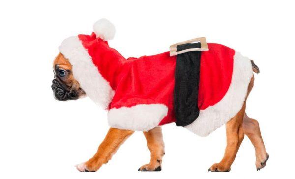Weihnachtsmann Jacke
